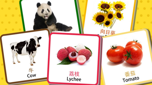 chinese_flashcards.png