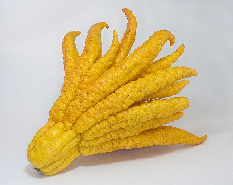 Buddha S Palm Food